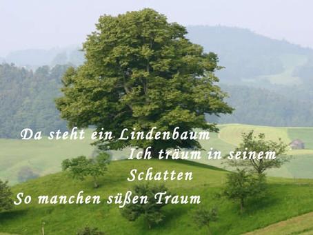 Der Lindenbaum『菩提樹』の解説