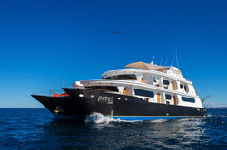 Petrel Cruise Yacht