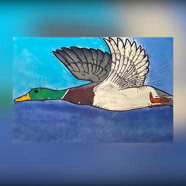 Mallard Duck (commission)