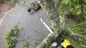 tree trimming service long island at the top tree service corp