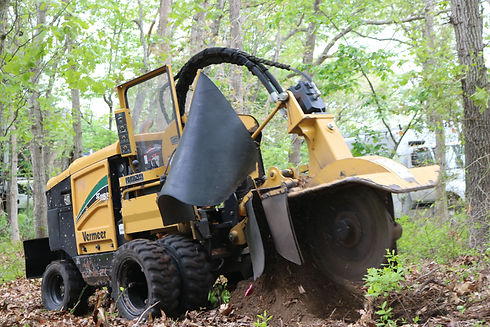 stump grinding and stump removal service at the top tree service corp
