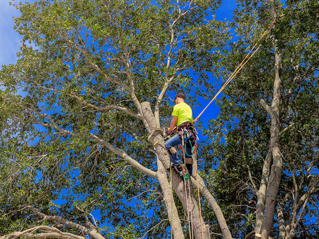 8 Warning Signs It's Time to Cut Down a Tree, and How to Do It