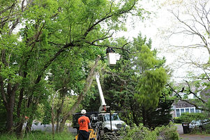 tree removal service long island at the top tree service corp