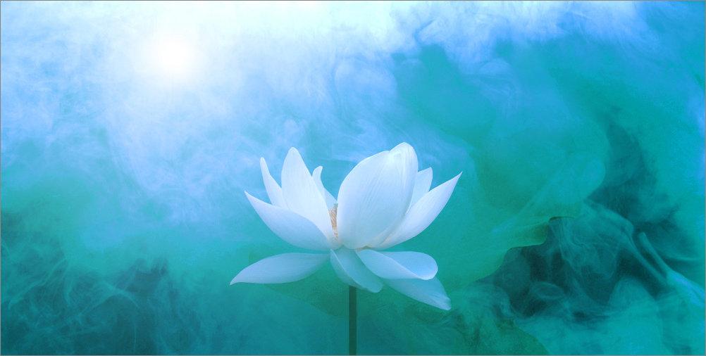 whitelily.jpg