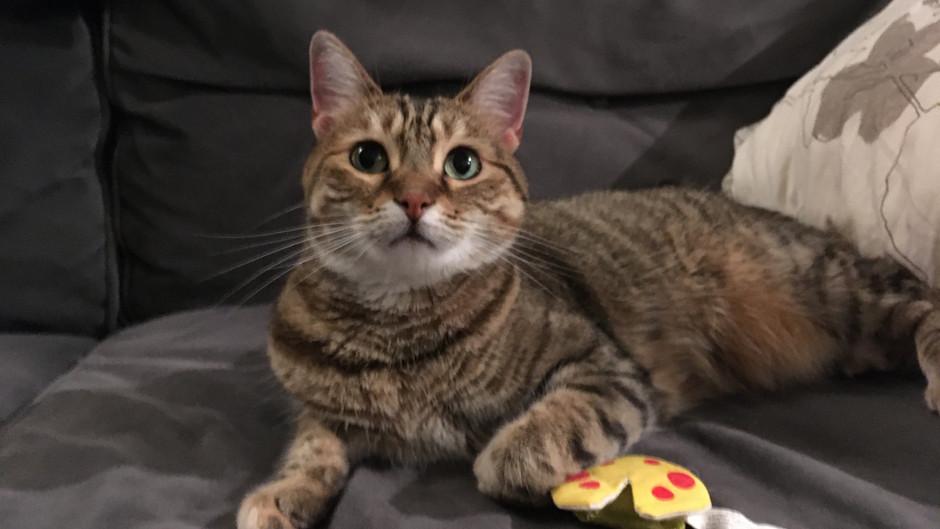Indi's Review: Yeowww! Catnip toys