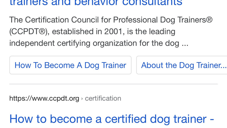 Looking for a Good Dog Trainer