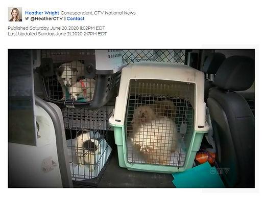 Pandemic Puppies