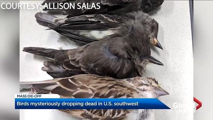 Fall Migratory Death