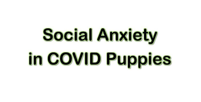 Social Anxiety in Pandemic Puppies