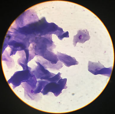 The General Practitioner's Approach to Cytology
