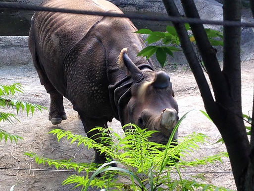 Veterinary Externship: Cincinnati Zoo