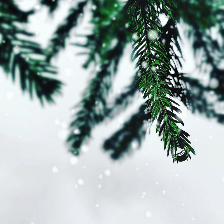 Festival of Trees - December 19th at 11:00 am