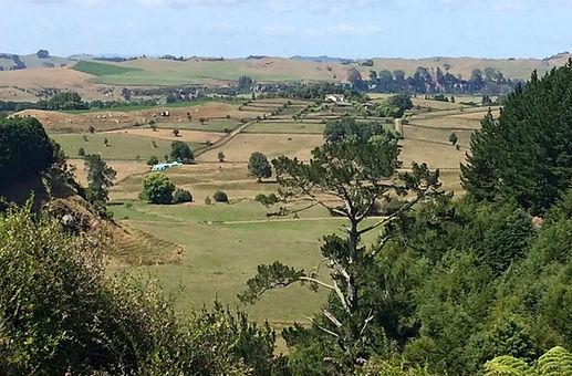 Patoral scene in New Zealand