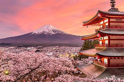 Voyage Zénifiant au Hanami Japonais 2h