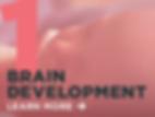 1_Brain_dev_link.png