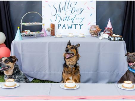 Shelter Dog Birthday Party!