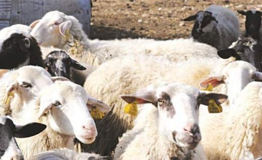 Ικανοποίηση Συμμαχίας Πολιτών για απόσυρση νομοσχεδίου για σφαγές Κοσέρ