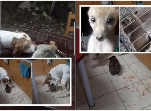 Ντροπή και αγανάκτηση για την κακοποίηση ζώων – Άμεση διερεύνηση και απόδοση δικαιοσύνης