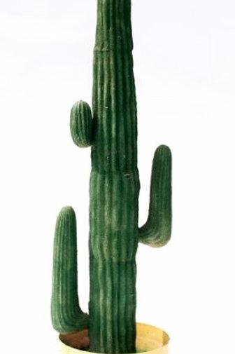 'Blazing Cactus' - Large Cactus
