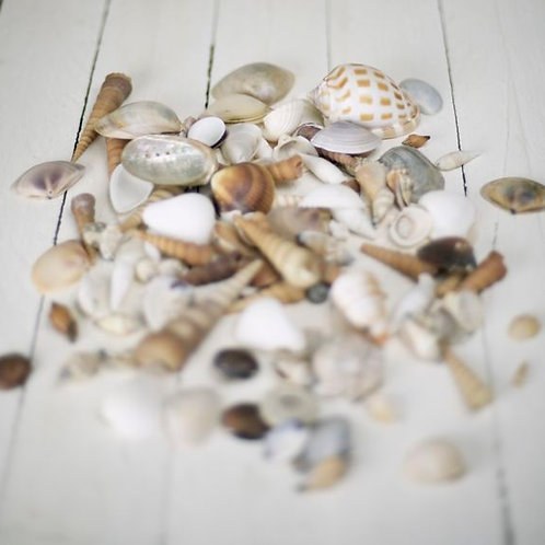 'Shelly' Shell Collection