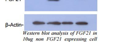 Human FGF-19, rabbit Pab