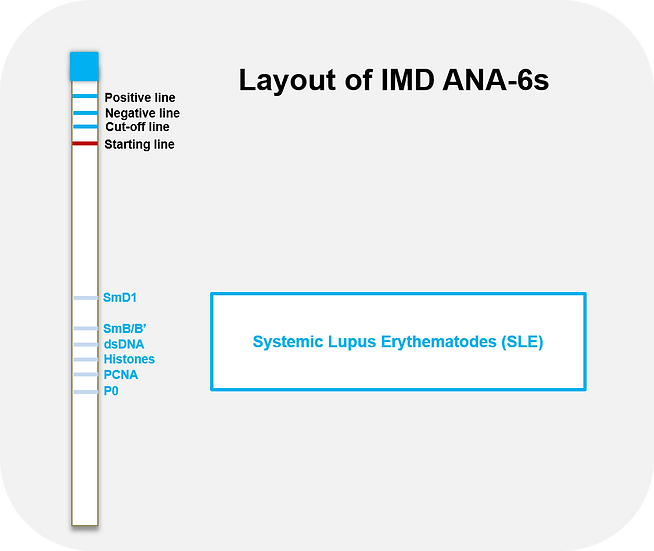 ANA-6s (Ready-to-use ImmunoBlot Strips)
