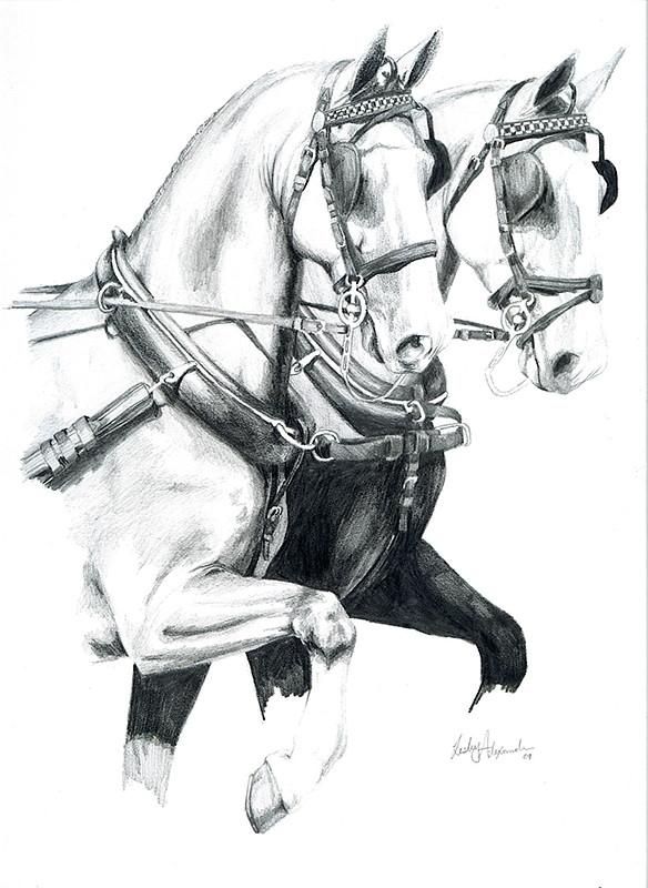 driving horses1.jpg