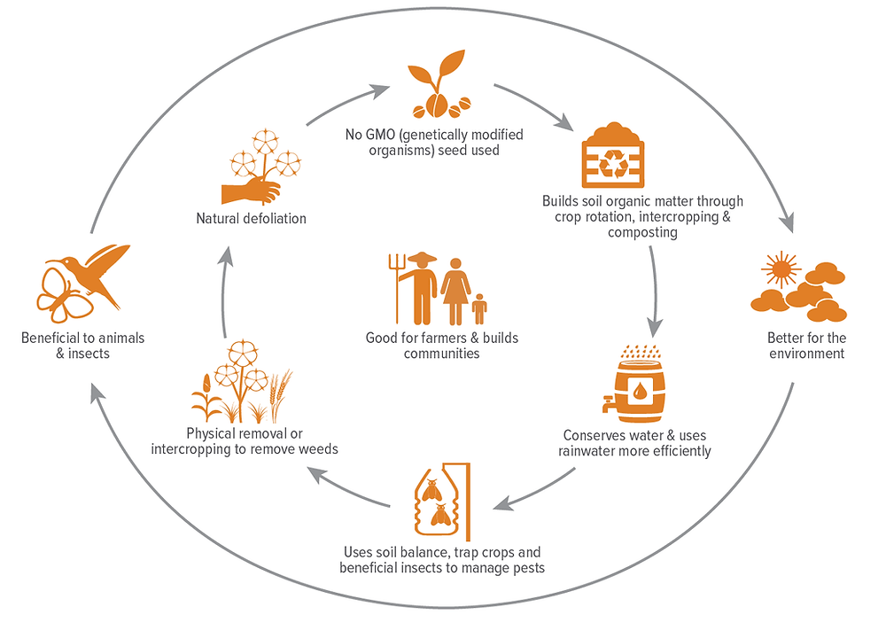 Organic farming system diagram depicting all the stages of it in vector style