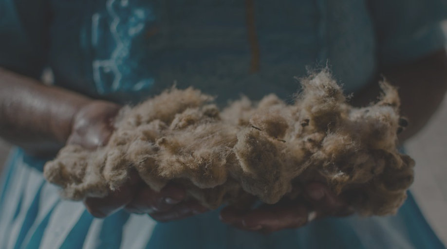 Hands holding raw wool