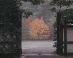 SENTO IMPERIAL PALACE 仙洞御所