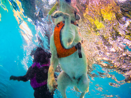 A Very Special Underwater Dog Photo Shoot