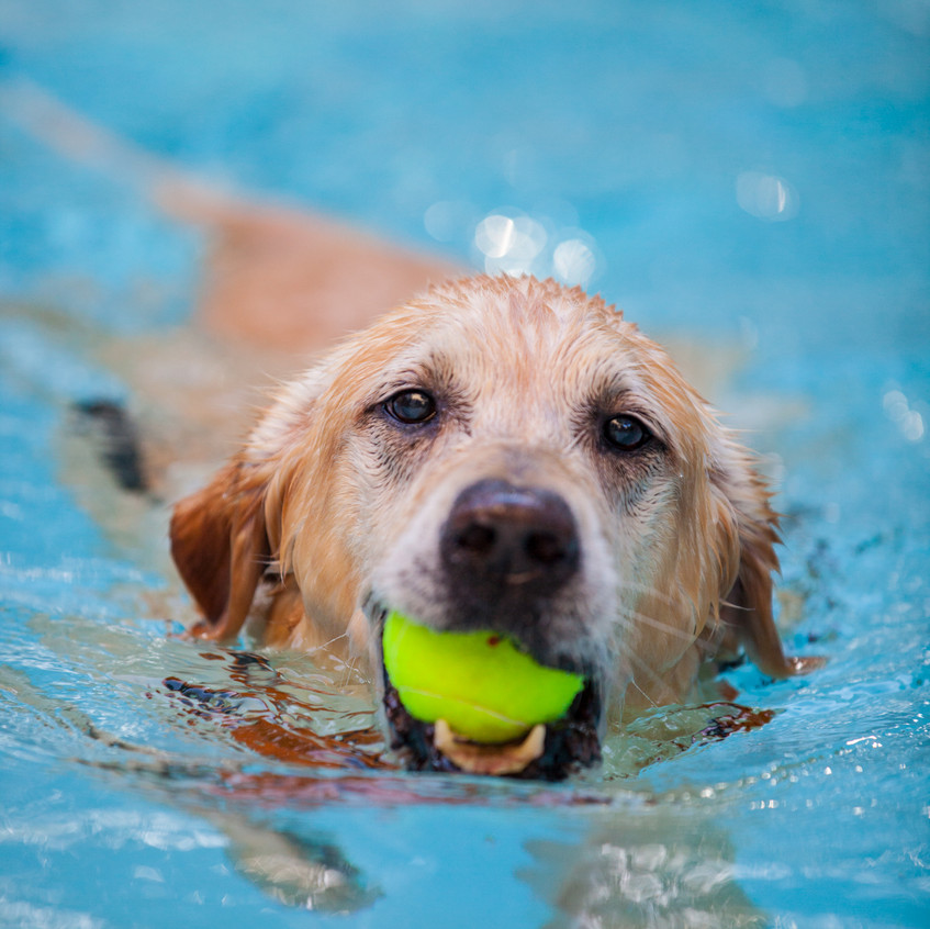 Underwater Dog Photo Shoot