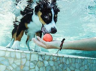 Underwater Dog Photo Shoot, Pet Photographe, Austin Texas