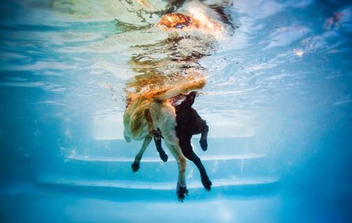 Underwater Dog, Pet Photography, Austin Texas