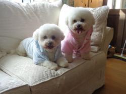 Princess & Bobby
