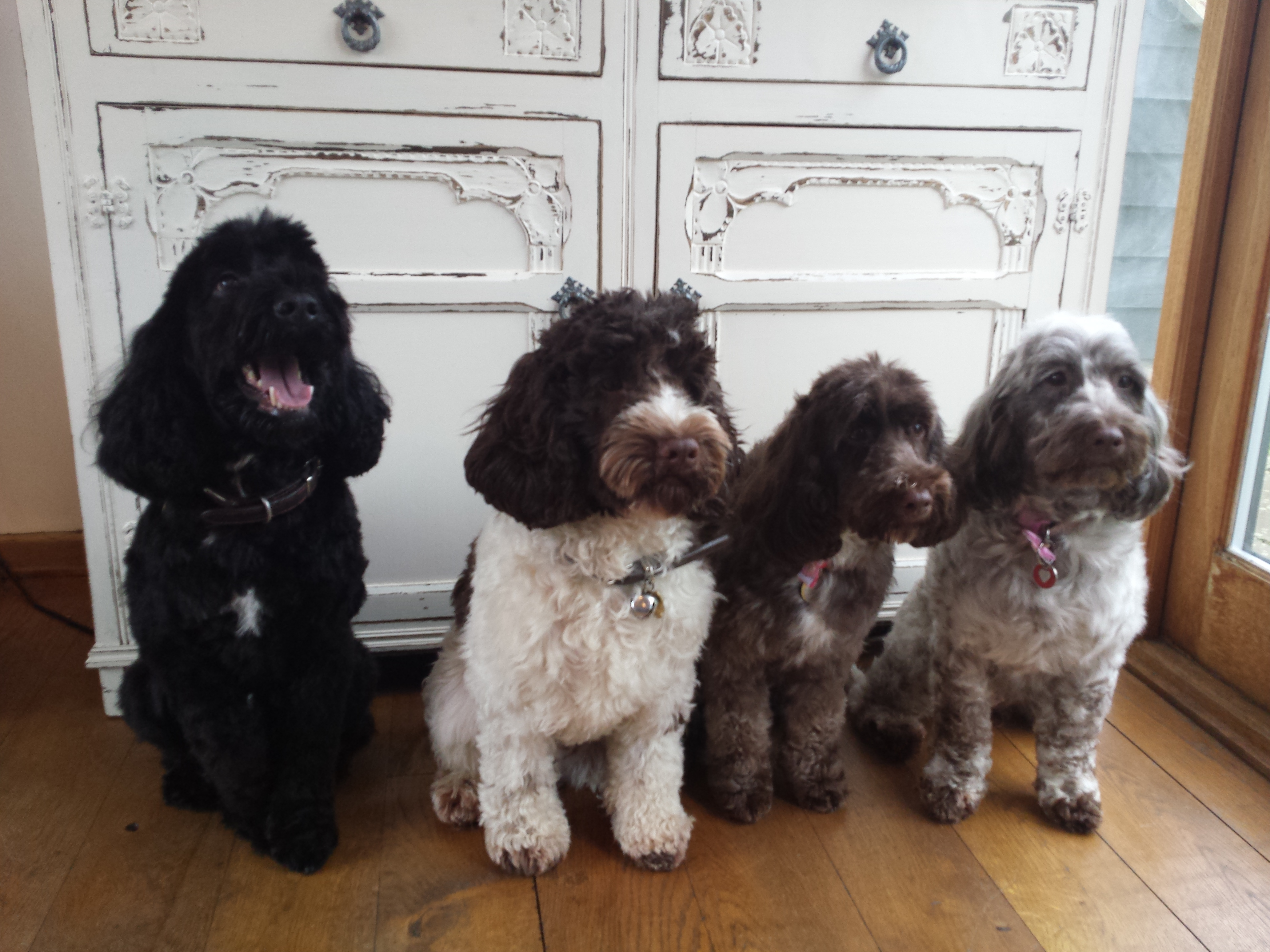 Bertie & Siblings