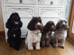Bertie & Siblings