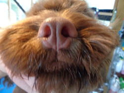 Boog's nose