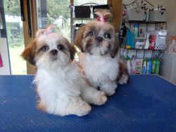 Winnie & Dolly