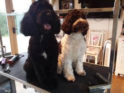 Bertie and Baloo