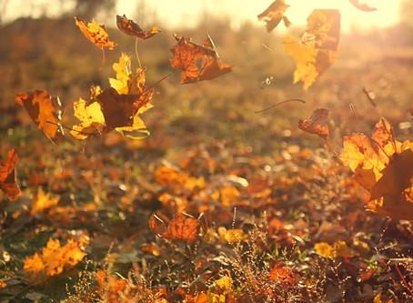 Fall:  The Perfect Season for Yin