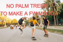 No palm tree