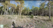 B - El Bruc forest