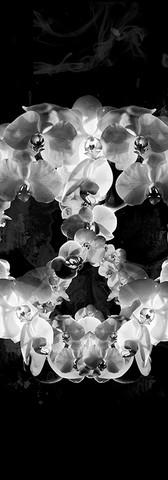 Orchid Skull