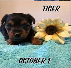 Tracey Pups.jpg