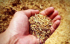 abundance-agricultural-agriculture-22661