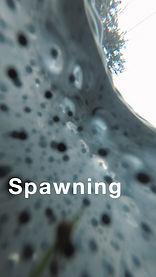 spawningpg.jpg
