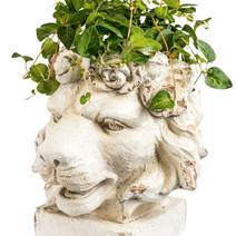 Lion Head Plant Holder