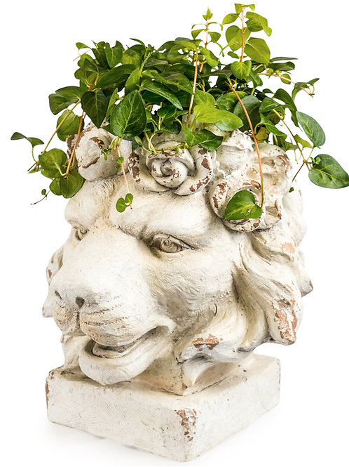 Lion Head Planter