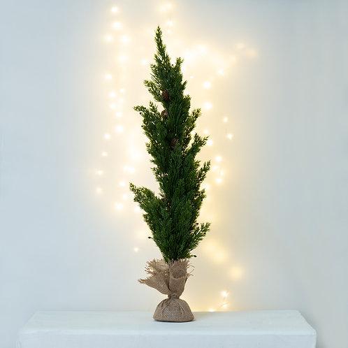 My Big little Christmas Tree